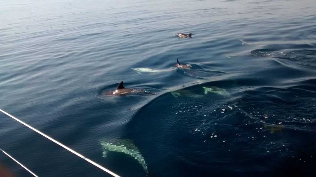 Dolphin watching. Colina Tropical
