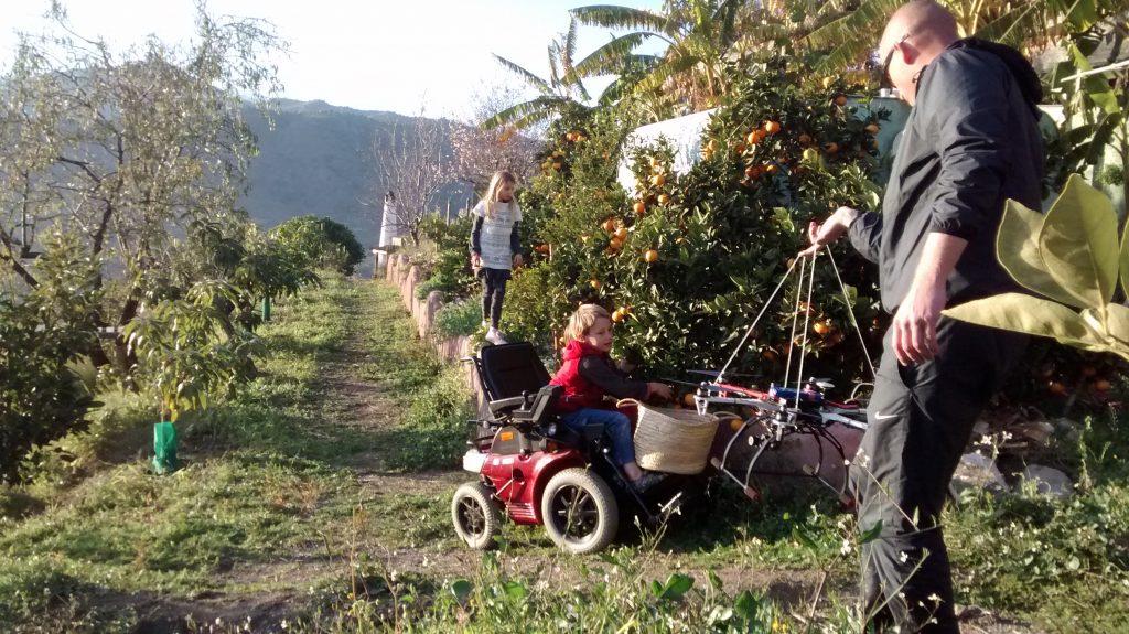 Récolte des oranges en fauteuil roulant. Villa Colina Tropical, maison à louer en Espagne