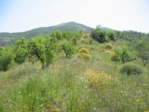 trekking-w-andaluzji,-Costa-Tropical, 2 minutes from Villa Colina Tropical